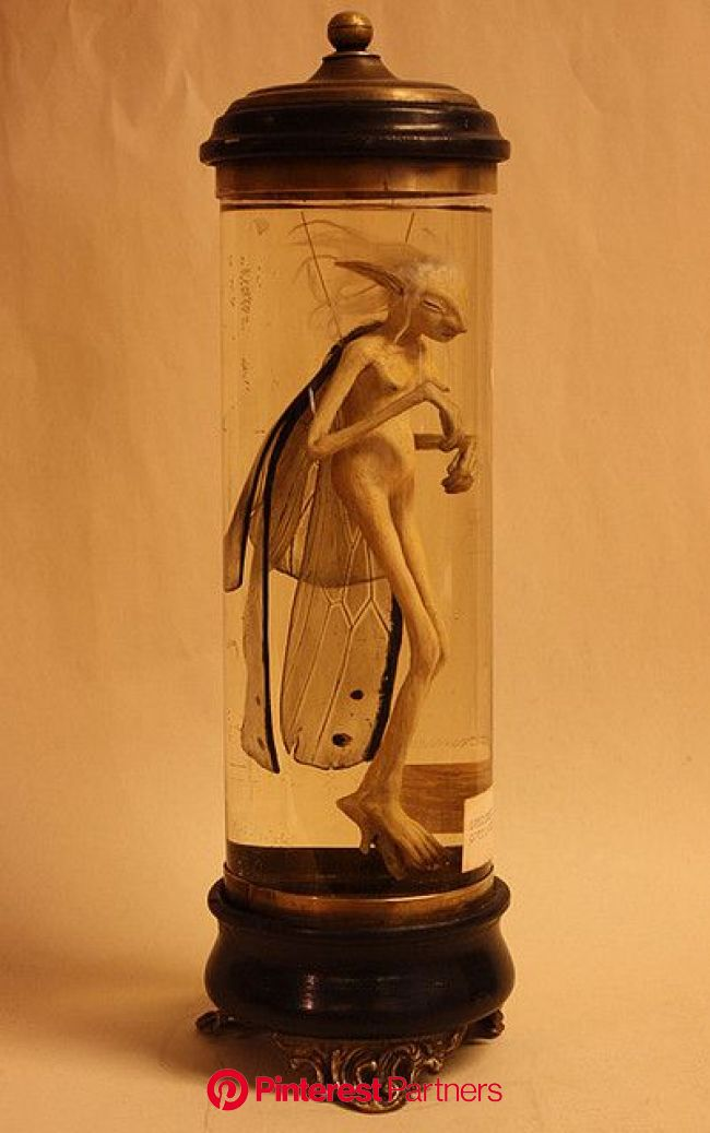 Cottingley Fairy   Magical creatures, Fairy art, Fairy
