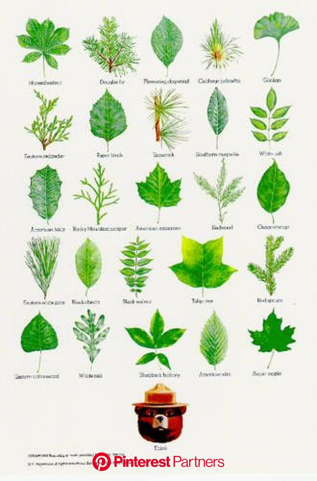 15 of Smokey Bear's Best Nature Posters | Leaf identification, Tree leaf identification, Nature posters