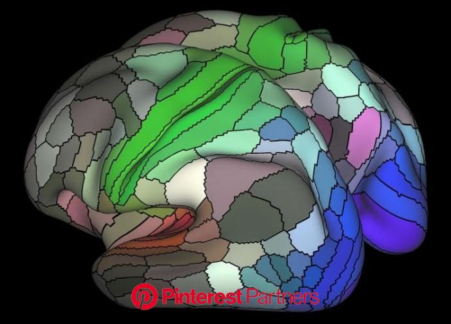 Medical News Today on Twitter   Brain mapping, Science and nature, Brain nervous system