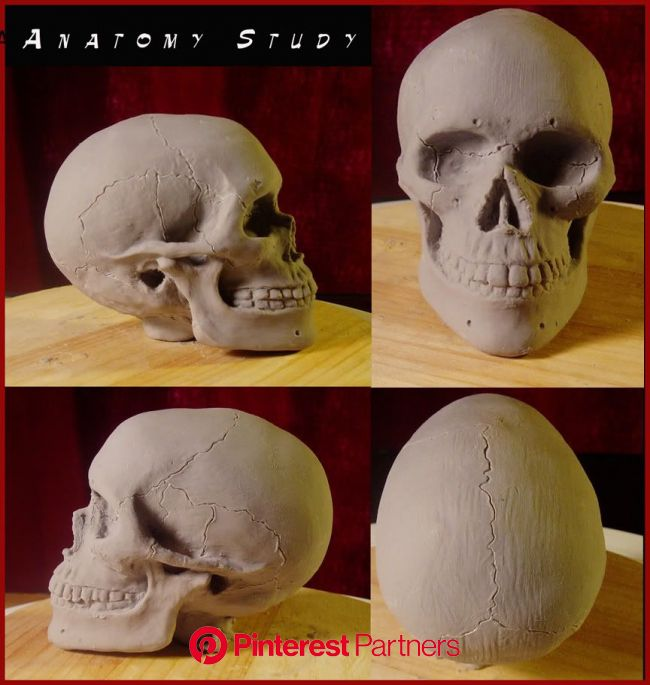 Pin by Brigitte Chamard on Inspired   Sculpture clay, Sculpting clay, Skull