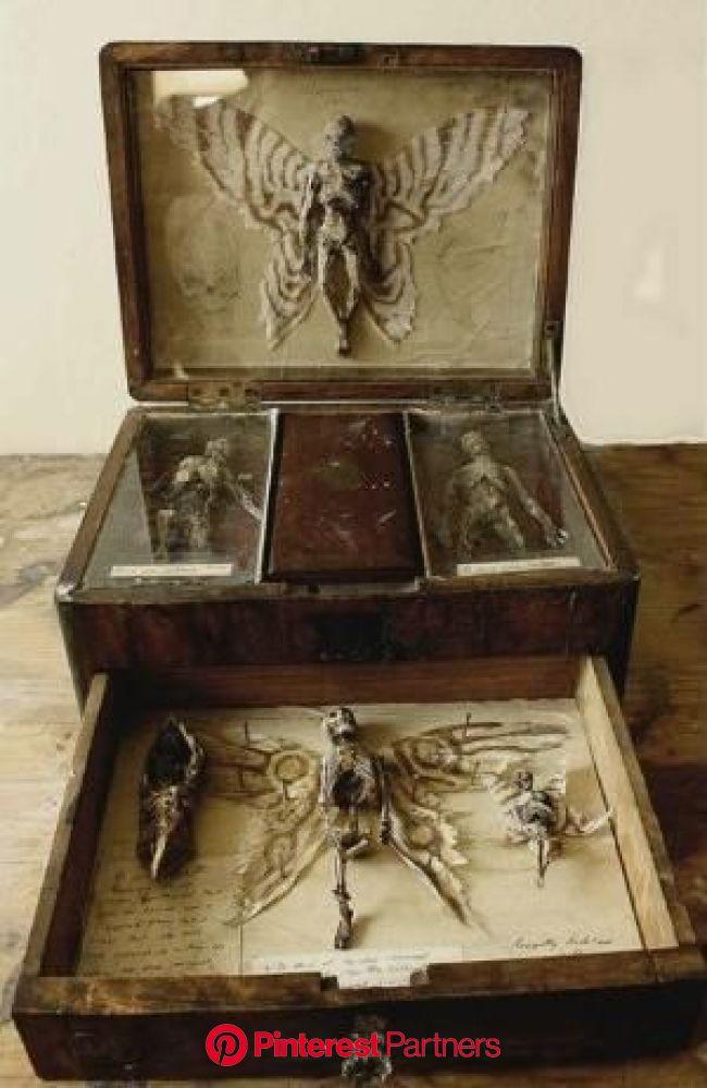 Esto encontraron en el sótano de un orfanato en 2020   Artefactos antiguos, Cajas de arte, Gabinetes de curiosidades