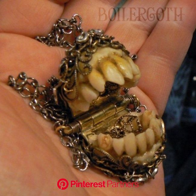 And you thought my taxidermied frog coin purse was bad! | Bone jewelry, Weird, wonderful, Teeth