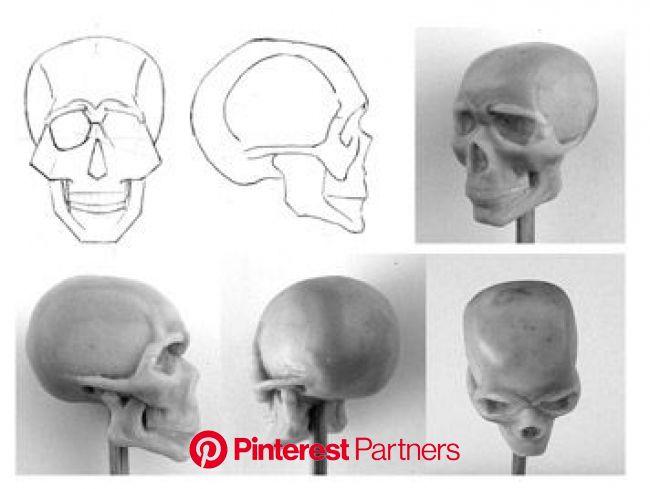 Анатомия человека. Последний урок. : Онлайн уроки • chen-la.com   Череп, Рисунки черепа, Проекты скульптур