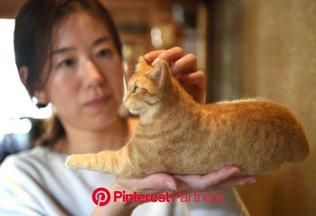 ふわふわ羊毛で作る「うちの子」 フェルト猫教室に集う愛猫家たち 写真12枚 国際ニュース:AFPBB News【2021】 | フェルト 猫, 猫, 羊毛フェルト 猫